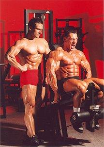 Muskelabbau nach einem Steroidzyklus minimieren